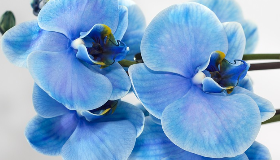 La orquídea (o de la cura por la palabra) - Alaia